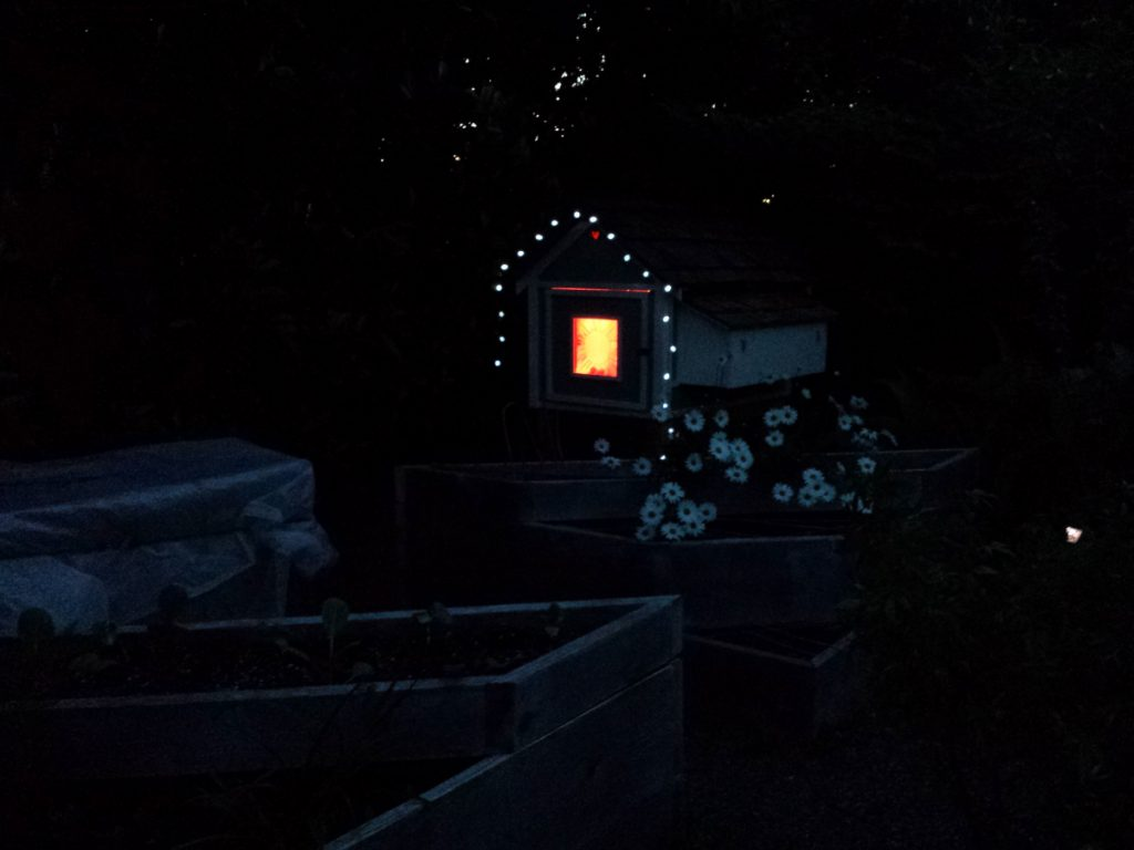 backyard chickens chicken coop at night