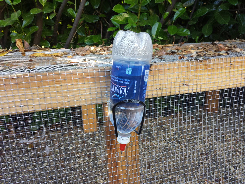 water bottle chicken waterer